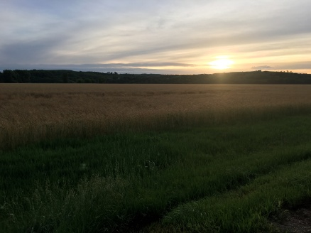 beautiful sunrise over the wheat field