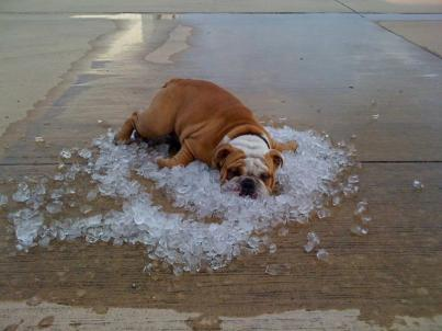 Image result for laying on ice